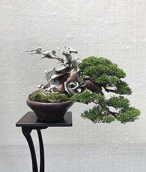 bonsai04s